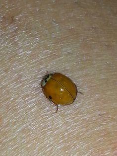 Hello lady bug