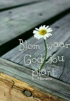 Bloom where God plants you Mom Prayers, Bible Prayers, Bible Scriptures, Bible Quotes, Motivational Quotes, Church Backgrounds, Afrikaanse Quotes, Goeie Nag, Inspirational Prayers