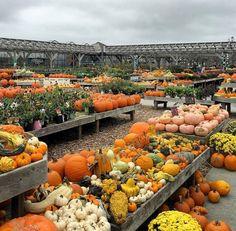 Barletts Farm Fall Home Decor, Autumn Home, Autumn Fall, Autumn Leaves, Holiday Decor, Pumpkin Display, Autumn Display, Harvest Time, Fall Harvest
