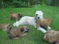 Duncan Mum pups.jpg