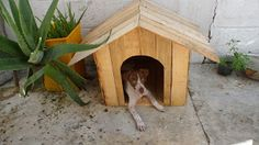 Muebles de palets: Caseta para perros hecha con cajas de fruta o palets