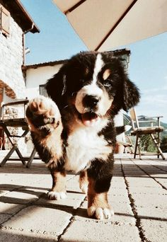 ✰ All social ✰ - sel - Tiere - Perros Super Cute Puppies, Cute Baby Dogs, Cute Dogs And Puppies, Doggies, Adorable Dogs, Cute Funny Animals, Cute Baby Animals, Animals And Pets, Nature Animals