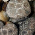 Search for Petoskey Stones