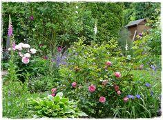 Fuchsienrots Garten-Homepage