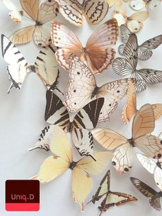 NEW ITEM 3D decorative butterflies  wall decoration  by uniqdots, $40.00