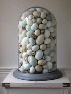 Robin Eggs in Cloche