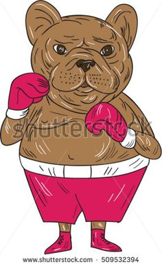 Illustration of a french bulldog boxer in a boxing stance viewed from front set on isolated white background done in cartoon style.  #boxer #cartoon #illustration