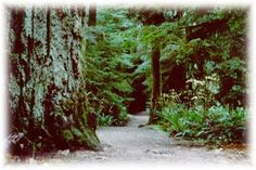 MacMillan Provincial Park - Cathedral Grove, old growth forest