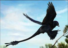 Microraptor