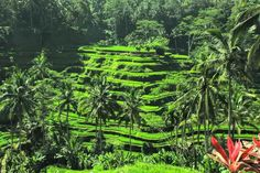 Bali Tegalalang rice terrace  Tegalalang  rice terrace i one of the main attractions just in 5 km northern part of Ubud and has a  magnificent view.   Namaste,  Anna