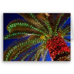 Decorated Palm Tree - A giant Christmas ornament!!