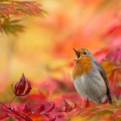 Birds not only sing in Spring.....  My mom used to say they chatter in Spring, and sing lullabies in Fall...