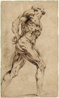peter paul rubens anatomical drawings - Google Search