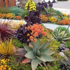 Drought Tolerant Landscapes                                                                                                                                                                                 More