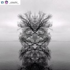 #Repost @_ciochi_ Strange #strange #stravaganza #natale #nature #lake #trasimenolake #trasimeno #water #ombra #tree #trees #imagine #no #nosense #grey #black #likeforlike #tagsforlikes #likeforlike #followme #follow4follow #follow4follow #instagood #instadaily #instagramers #photooftheday #picoftheday #iphoneonly #iphonesia