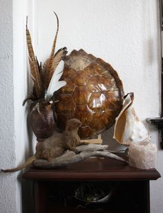interior, taxidermy