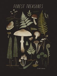 I just published a lot of new items for the nature-lovers in my shop. Mostly ferns and mushrooms, but soon I will add lichens and twigs and, hopefully, insects. Feel free to suggest ideas for. Art And Illustration, Gravure Illustration, Kunst Inspo, Art Inspo, Design Jardin, Mushroom Art, Witch Aesthetic, Dark Backgrounds, Botanical Prints