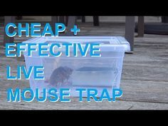 This is another of my simple and easy to make homemade humane mouse trap made from normal household items. Easy to build, easy to bait, easy to release and b. Rat Trap Diy, Mouse Trap Diy, Mouse Trap Game, Best Mouse Trap, Mouse Traps That Work, Mouse Deterrent, Homemade Mouse Traps, Mice Removal