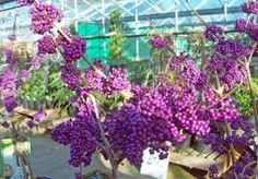 Make the most of cold-weather gardening Do you shut up shop in the garden from October to March? If you do, you're missing the joy of growing some great plants that will warm the coldest of h… Winter Plants, Growing Flowers, Amazing Flowers, Gardening, Lawn And Garden, Horticulture