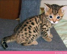 Baby Leopard? Adorable!