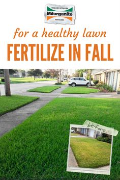 Warm-season grasses put down your next application of Milorganite fertilizer in early October. For best results, mix Milorganite while overseeding Milorganite to seed by weight). The last time to fertilize warm-season grasses in fall, is o