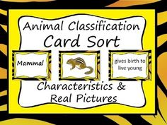 A great animal classification lesson, review or assessment!Students sort the characteristics and pictures into 6 categories: Mammal, Bird, Fish, Amphibian, Reptile and InvertebrateSheet for recording the characteristics and answer key are included.ENJOY!
