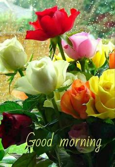 479 Best Good Morning Gif photos by sonusunariya Good Morning Roses, Good Morning Cards, Latest Good Morning, Good Morning Happy, Good Morning Picture, Good Morning Messages, Morning Pictures, Morning Wish, Good Morning Images