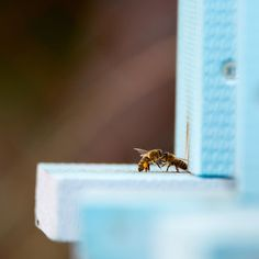 #vcely #tamron #tamron150600 #ul #med #honey #bees #fight
