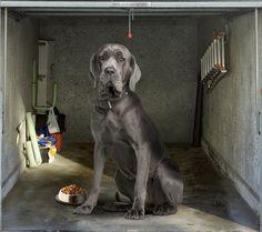 Fotoplane für Garagentor Doggge / Garage Mural Great Dane