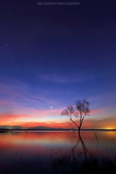 """500px / Photo """"Rain stars and sunrise over the dead tree at the lake"""" by isarescheewin"""