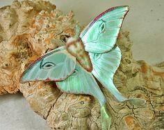 Leather moth brooch!    Luna Moth brooch / Illuminated Leather. $110.00, via Etsy.