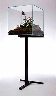 Minimalist terrarium by Lindsey Taylor for Atlas Industries