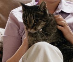 Animal behaviorists speculate that an adult cat kneads to show contentment, to calm herself when shes feeling anxious or to mark a person or object with her scent from the sweat glands in her paws.