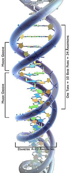 3D Science DNA structure labeled AngstromsLostFound.gr ΔΩΡΕΑΝ ΑΓΓΕΛΙΕΣ ΑΠΩΛΕΙΩΝ FREE OF CHARGE PUBLICATION FOR LOST or FOUND ADS