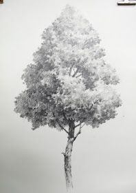 NAMIL ART: [drawing step by step] Drawing a Hardwood Tree - Basic Pencil drawing process 활엽수 나무그리기 - 기초 연필 데생 드로잉