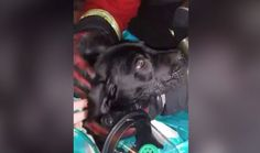 Thanks to brave firefighters — and a special new oxygen mask made just for pets — Buster the puppy is still alive today to bark, snuggle and play. Buster was rescued from a blazing kitchen fire in Birmingham, England, and was lying on the ground unconscious — in fact, his breathing had completely stopped. But …