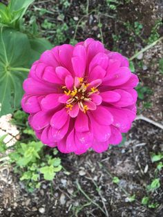 One single zinnia plant lasted the entire AZ summer to give me beautiful blooms.
