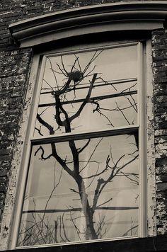 Reflected Bird Nest, via Flickr.