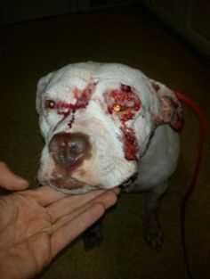 Court may let abused dogs be returned to abuser. Please read and share. This should not happen!
