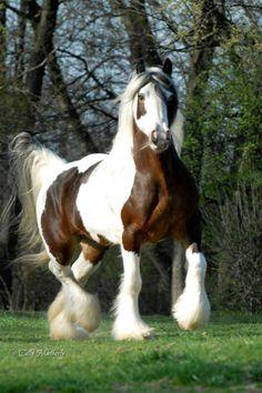 A dream horse!!