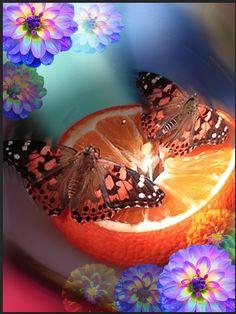 Botanical Garden Butterflies and Dahlia Flowers