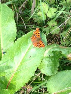 Seen today in the garden