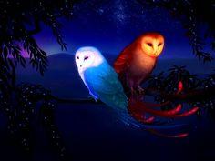 Beautiful owl couple   Desktop HD wallpaper. Stock photos HD quality.