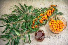 Omega 3, Plants, Alcohol, Plant, Planets