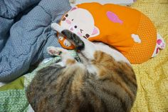 냥이야 같이 꿀잠 자자 아이좋아   집에서 꿀잠 자고있을 울 애긔들 보곱당 #cat#cats#kitty#catstagram#neko#catgram#catlover#catlove#koreanshorthair#캣스타그램#냥스타그램#꼬질꼬질#냥이#고양이#반려묘#사랑 by parkjinen