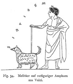"""This is the only image of a Melitan which might have the name """"Melitan"""" inscribed on it. Although the letters in this reproduction appear to say """"MEAITAIE"""", that word makes no sense in Greek so scholars often read this as """"MELITAIE"""", assuming a lambda """"Λ"""" instead of an alpha """"A"""". Amphora from Vulci, ca. 500 BC. Otto Keller, Die Antike Tierwelt (Vol. 1), p93."""