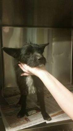 Found dog dachshund LA Found dog at Hermon Dog Park