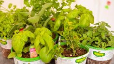 How to Grow and Use Herbs