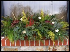 Outdoor, Plants, Christmas Decorations, Outdoors, Outdoor Games, Plant, The Great Outdoors, Planets