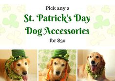 Dog Costume for St. Patrick's Day Matching St. by AegeanDrawn